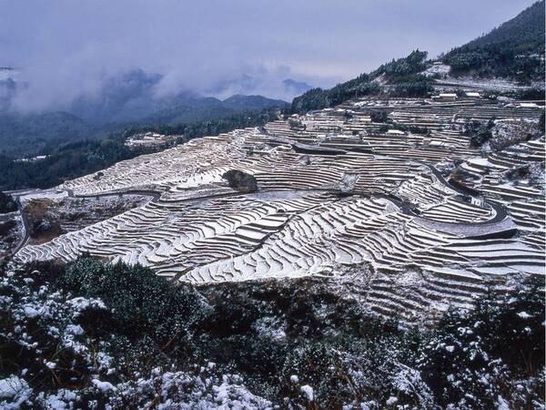 【丸山千枚田(冬)】日本一の棚田景観とも言われる絶景
