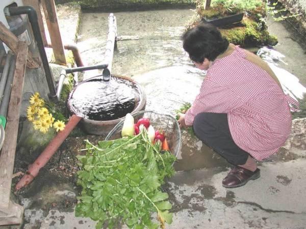 【宿周辺】針江で飲んでいる湧き水は、なんと100年以上の時間をかけて私たちの前に姿を現しています。日本でも有数の軟水で、やわらかく少し甘みを感じます。