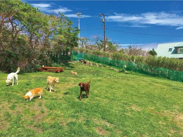 【ドッグラン】広々とした芝生のほか4箇所ものドッグランを完備