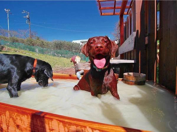 【わんちゃん専用露天風呂】白濁のにごり湯を愛犬も堪能!
